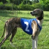 DG SET OF RACING SHIRTS FOR SIGHTHOUND BREEDS